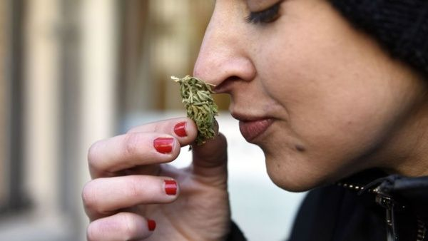 Marihuana en Uruguay se agota en tiempo récord tras venta legal