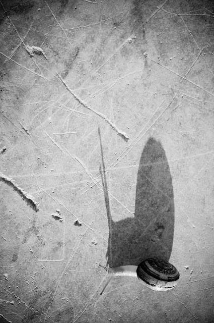 'Un caracol asombrado', Carlos Larios