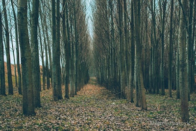 """Spooky Forest is not spooky but indie pop cool- listen to """"Escape Artist"""""""