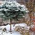 A jól tervezett téli kertek titkai