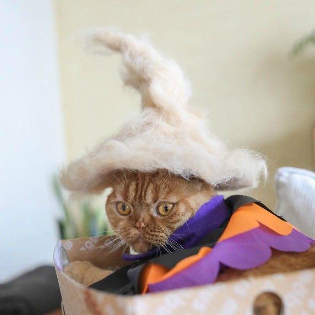 Φωτογραφίζει γατάκια στα οποία έχει φτιάξει καπελάκια από το πεσμένο τρίχωμα τους! (φώτο)