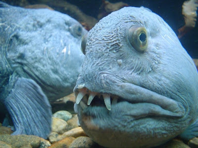 Nightmare fish with a human face