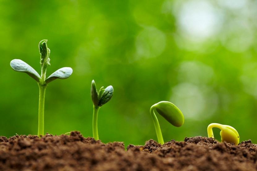 Pertumbuhan & Perkembangan Tumbuhan meristem