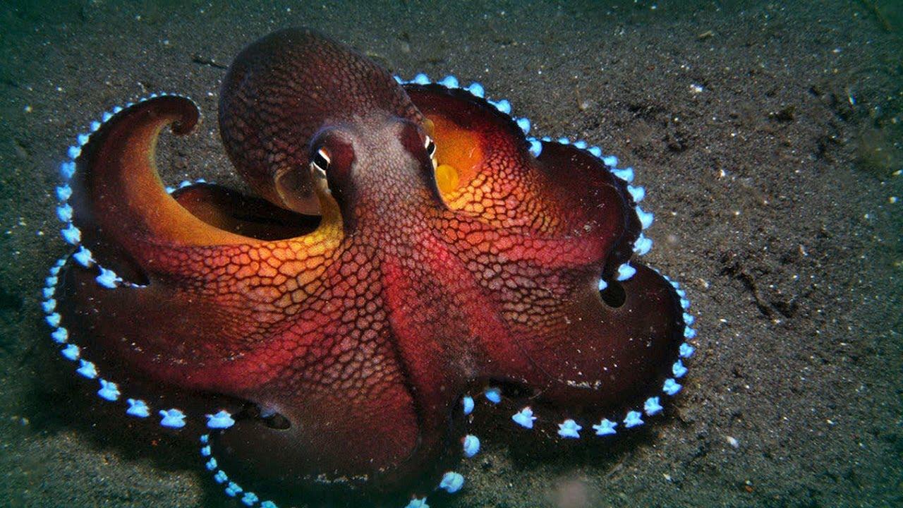 Glitter in my Kitchen: Octopuses vs Octopi