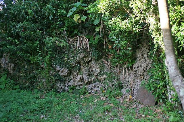 ナスの御嶽後方にある琉球石灰岩の写真