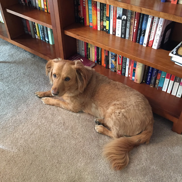 dog lying on floor in front of bookcase The 3 Rs Blog