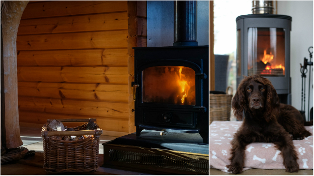 5 Reasons to Take Your Dog on Holiday this Winter