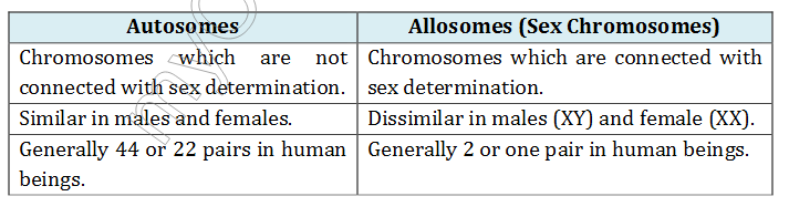 What is the difference between autosomes and chromosomes