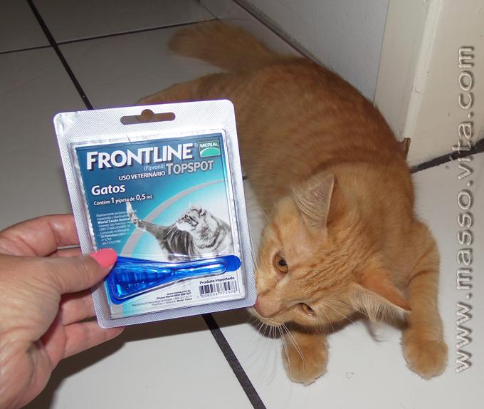 Frontiline Topspot Gatos
