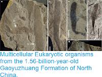 https://sciencythoughts.blogspot.com/2016/05/multicellular-eukaryotic-organisms-from.html