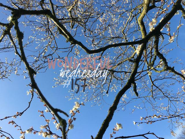 Wonderful Wednesday #157