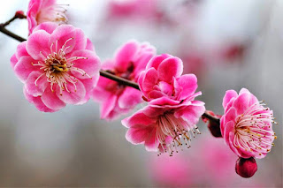 احلى صور الورود الرائعة