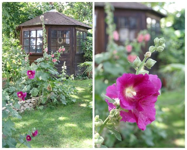 Stockrosen säen sich im Garten selbst aus