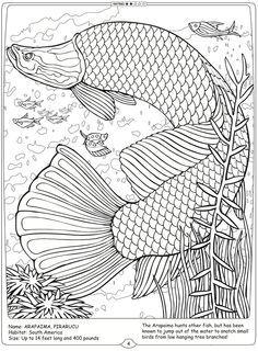 Printable Arapaima Fish Coloring Sheet For Kids Online