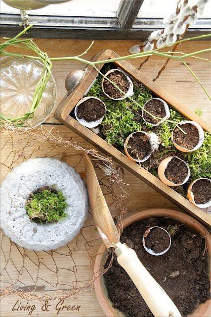 https://www.living-and-green.com/garten/tipps---tricks/wirf-dich-in-schale---das-garteln-geht-los--.html