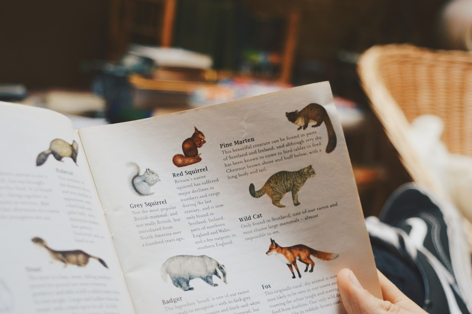 coffee table book about animals