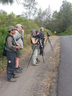 Birding at Ijen (east Java), guided by Made Surya. Http://birdingbali.blogspot.com