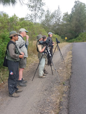 Birding at Ijen (east Java), guided by Made Surya. Http://birdingbali.blogspot.com