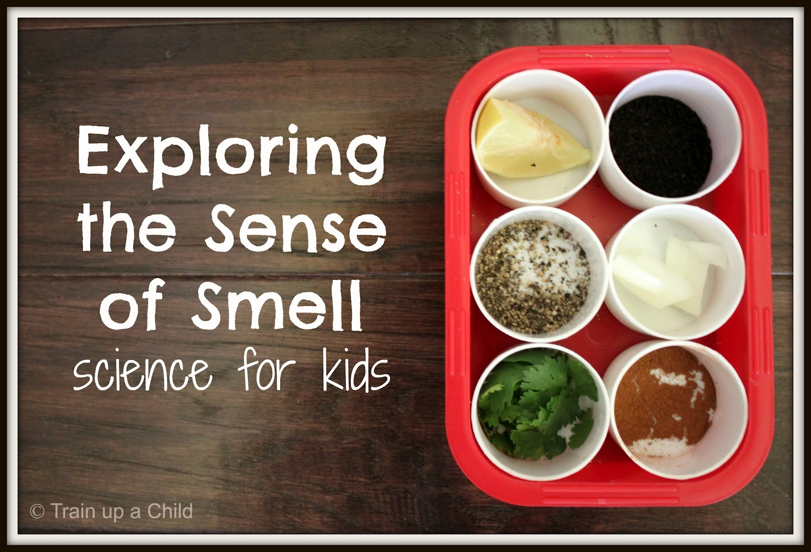 Exploring The Sense Of Smell With A Game Learn Play Imagine