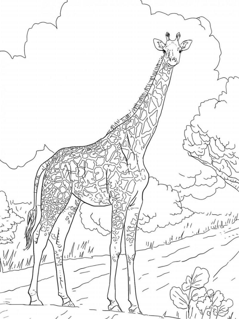 Gambar Kartun Binatang Berkaki Empat