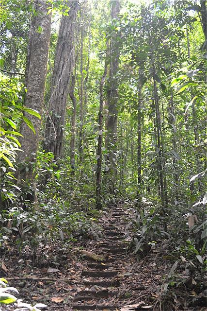 Guyane, Sentier Trésor, Kaw, Roura