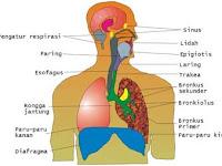 Gangguan atau Penyakit Pada Alat Pernapasan