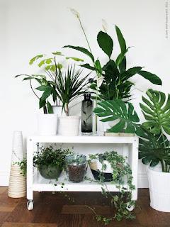 plantes, inspiration, blog, mode, blogueuse, française