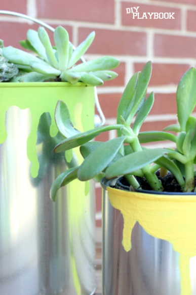 These little succulents go perfectly in these paint can planters.