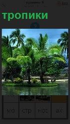 красивое место в тропиках