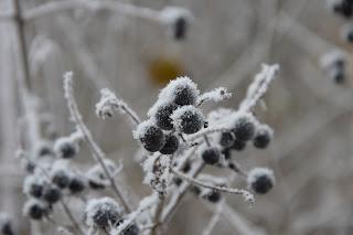 Zimní foto přírody