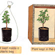 Basic Needs of Plants | Science Year 4