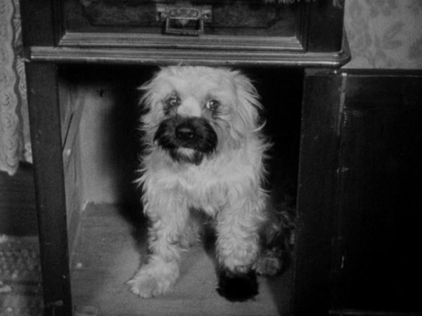 Thelma Todd: A Girl And Her Dog
