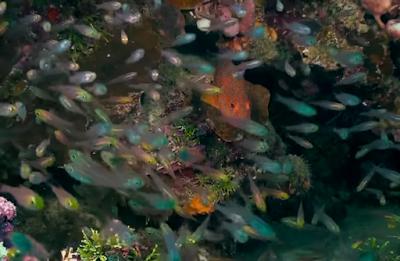 Lokasi Menyelam Wakatobi Dive Sites ikan