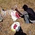 Man spotted butchering a zebra near Nairobi Highway ...photo