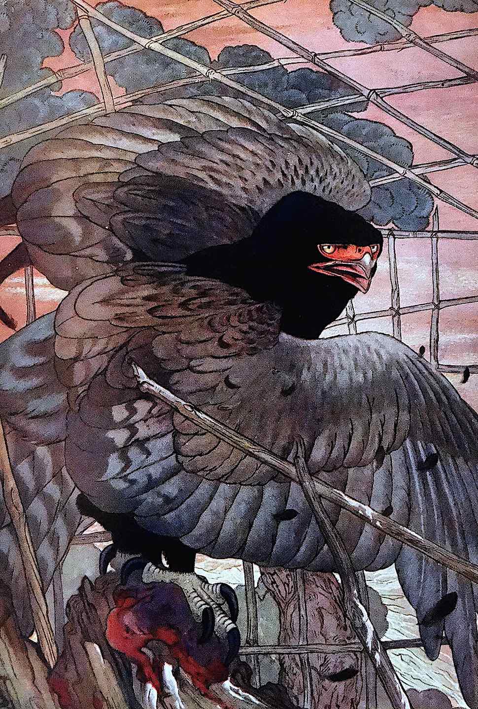 an E.J. Detmold illustration of a trapped hawk