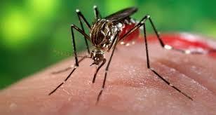 Obat tradisional chikungunya
