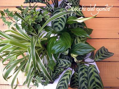 quadro vegetale Ortisgreen