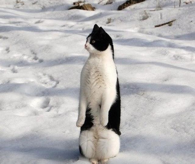 she penguins