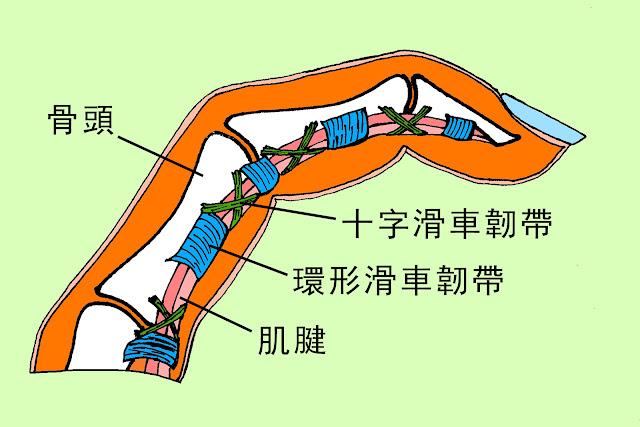 好痛痛 攀岩 手指痛 環形滑車韌帶 十字滑車韌帶 ATX 物理治療 姚斯元