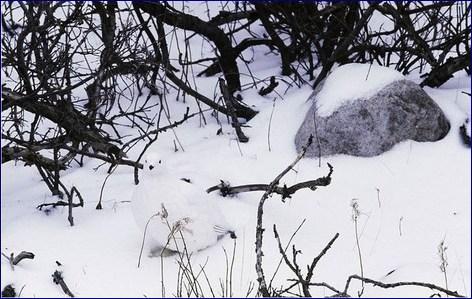 Winter Hidden Bird Pic Puzzle