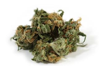 A loose bud of marijuana in Auburn, CA