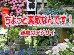 鎌倉とアジサイ