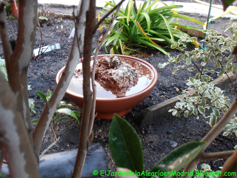 El jard n de la alegr a ba eras y bebederos para p jaros for Bebederos para aves jardin