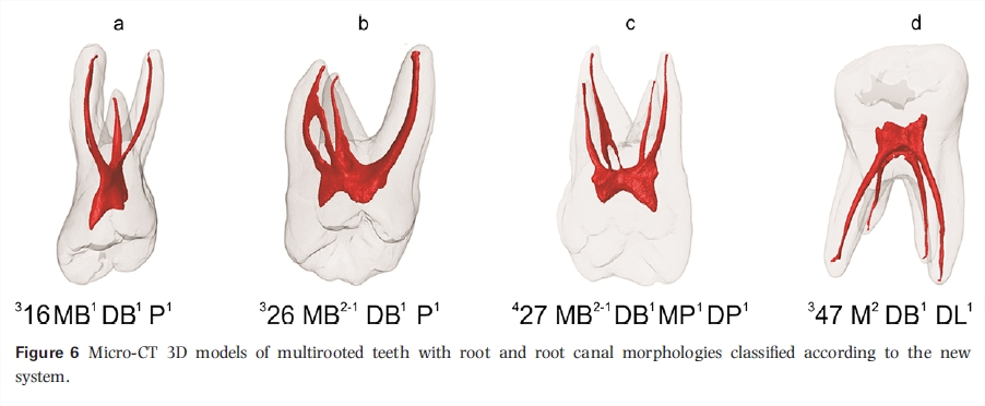 The Root Canal Anatomy Project: 2016