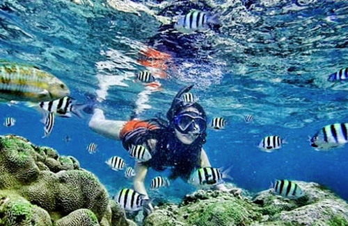 snorkeling-di-tegal-mas-island-eloratour-wisata-lampung