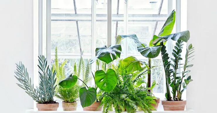 Las 10 plantas m s decorativas la bici azul blog de for Cuales son las plantas decorativas