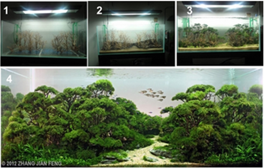 Alternatif Desain Aquascape Simple Aquascape
