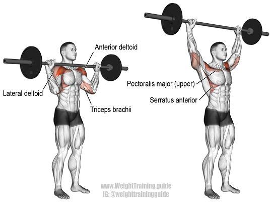 6 Barbell Shoulder Workouts To Build Strong And Muscular Shoulders