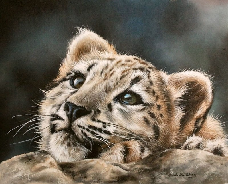 05-Snow-Leopard-Cub-Sarah-Stribbling-A-Wildlife-and-Pet-Portrait-Artist-www-designstack-co