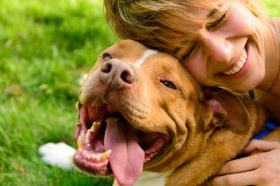 Combatir el abandono de perros